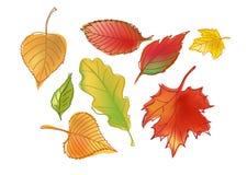 Gezogener Autumn Leafs Stockfotos