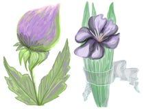 Gezogener Klee und Iris Stockfotos