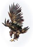 Gezogener lokalisierter fliegender Adler auf der Seite vektor abbildung
