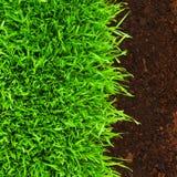 Gezond gras in grond stock fotografie