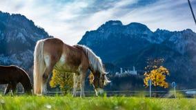 Gezond Paard in een Weiland stock afbeeldingen