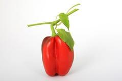 Gezond Spaanse pepervoedsel, met steel Royalty-vrije Stock Afbeeldingen