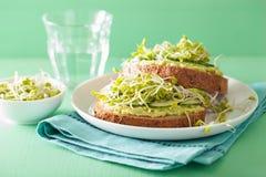 Gezonde avocadotoost met de spruiten van de komkommerradijs stock fotografie