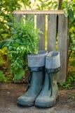 Gezonde en groene groenten in een oud rubber goed royalty-vrije stock afbeeldingen