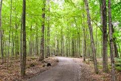 Gezonde esdoorn bosweg tijdens de zomer Stock Fotografie