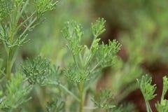 Gezonde greens Stock Foto