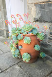 Gezonde groene succulents Royalty-vrije Stock Foto's
