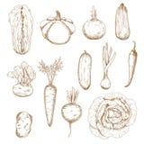 Gezonde groenten geïsoleerde geplaatste schetsen Stock Fotografie