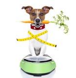 Gezonde hond royalty-vrije stock afbeeldingen