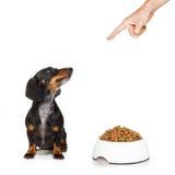 Gezonde hond met voedselkom en eigenaar stock foto