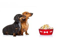 Gezonde honden met voedselkom en eigenaar stock fotografie