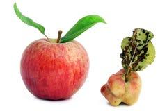 Gezonde jonge en zieke rotte appelen royalty-vrije stock foto's