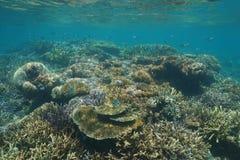 Gezonde koraalrif onderwater Zuid-Pacifische oceaan Royalty-vrije Stock Foto's