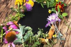 Gezonde kruiden en bloem, royalty-vrije stock fotografie