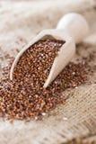 Gezonde rode Quinoa Stock Afbeelding