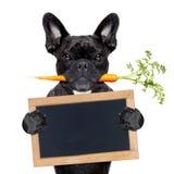 Gezonde voedselhond royalty-vrije stock afbeelding