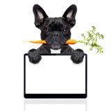 Gezonde voedselhond royalty-vrije stock foto