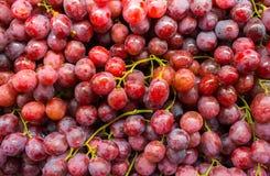 Gezonde vruchten Rode wijndruiven stock foto's