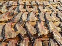 Gezouten, in de zon gedroogde tilapia vissen dorsale vin stock afbeelding