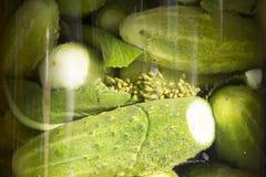 Gezouten komkommer met kruiden in pekel Stock Foto's