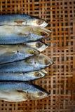 Gezouten makreel op bamboe rieten achtergrond Stock Afbeelding