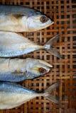 Gezouten makreel op bamboe rieten achtergrond Stock Foto