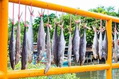 Gezouten vis die zonlicht en hemel is royalty-vrije stock foto