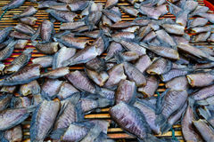 Gezouten vissen Stock Foto