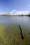 Gezwelde rivier Stock Foto's