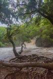 Gezwelde rivieren en gutsende wateren op Maui royalty-vrije stock afbeelding