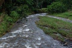 Gezwelde stroom bij het Kuilau-Randgebied, lihue-Koloa Forest Reserve op Kauai, Hawaï, na een stortbui royalty-vrije stock foto's