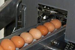 Ägg som förläggas på överföringen, fodrar Royaltyfri Foto