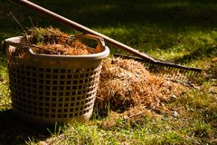 Ggardening in autumn Royalty Free Stock Photography