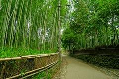 Ggreen竹植物森林在日本禅宗庭院里 免版税库存图片