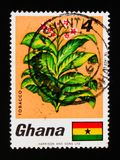 Ghana postage stamp shows Tobacco, Fauna and flora serie, circa 1968. MOSCOW, RUSSIA - SEPTEMBER 3, 2017: A stamp printed in Ghana shows Tobacco, Fauna and flora Stock Image