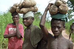 Ghanaian boys carry yams on their heads. Ghana, village Abease: Group portrait of young people to eat from the agricultural land bring home with just harvested Stock Photography