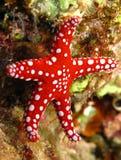 Ghardaqa sea sta Royalty Free Stock Photo