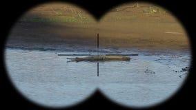 Gharial鳄鱼Gavialis gangeticus,亦称Gavial通过被看见的双筒望远镜 在野生生物的观看的动物 股票视频
