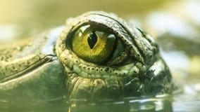 Gharial öga i vatten Fotografering för Bildbyråer