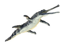 Gharial. 3D digital render of a gharial or Gavialis gangeticus, or gavial, or fish-eating crocodile isolated on white background Stock Photo