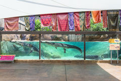 Gharial-Ausstellung Stockbild