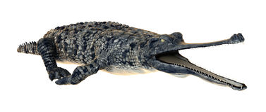 Gharial Stock Photography
