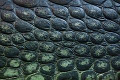 Gharial (Gavialis gangeticus), także zna jako gawial Fotografia Royalty Free