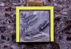 Gharial-Stich lizenzfreie stockbilder