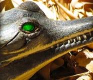 Gharial zielony oko i zębu zbliżenie Zdjęcia Stock