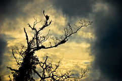 Ghastly Tree. A lonely leaveless tree that gives the viewer impression of dreadful and that it is haunted Stock Photo