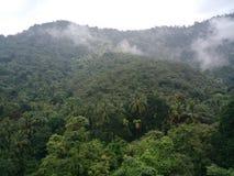 Ghats occidentali della natura in India Immagini Stock Libere da Diritti
