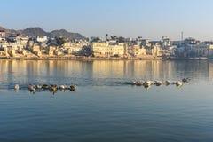 Ghats przy Pushkar jeziorem Emigracyjni pelikanów ptaki w jeziorze Rajasthan indu fotografia stock