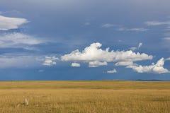 Ghepardi in savanna Immagini Stock Libere da Diritti