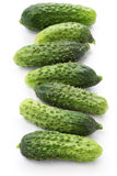 Gherkin, garden fresh cucumbers Stock Images